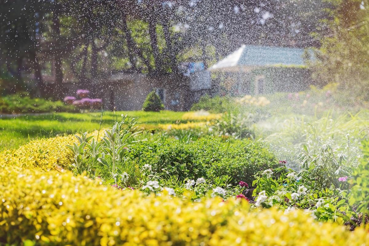 die optimale gartenbew sserung raintime nebel und. Black Bedroom Furniture Sets. Home Design Ideas