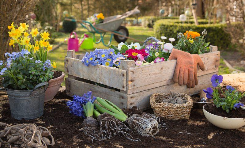Gartenbewaesserung_Raintime_Startschuss_Gartensaison_AdobeStock_80058191(1)