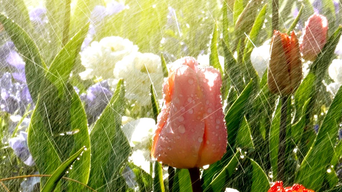 Bewaesserung_fuer_den_Garten_Raintime_Online_Shop_Bewaesserungssysteme