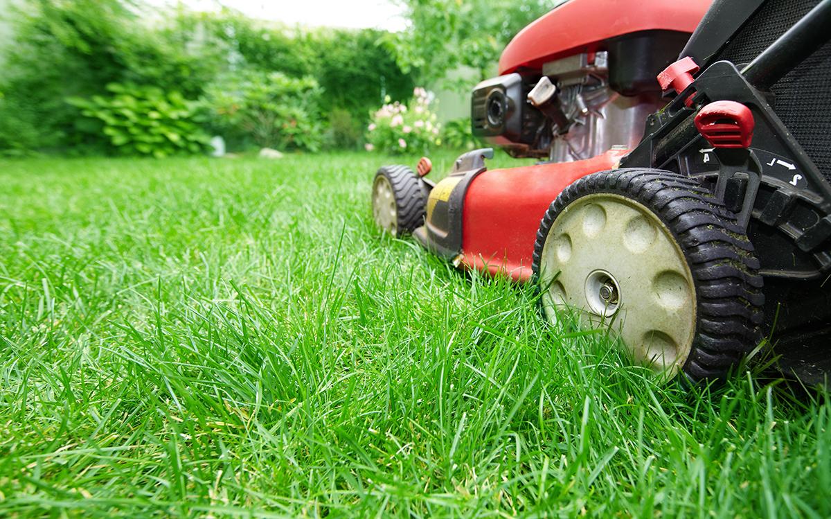 Einfache Tipps Für Einen Schönen Rasen Raintime Nebel Und
