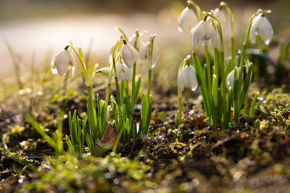 Fruehlingsboten-Bewaesserung-im-Garten-Raintime-Systeme