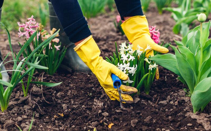 gartentipps-ziergarten-im-maerz-raintime-bewaesserung-systeme-blumen-einpflanzen